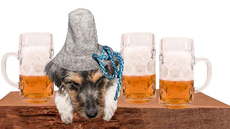 Dog Friendly Pubs in Norfolk