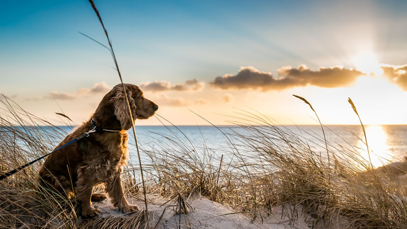 Dog Friendly Beaches in Norfolk