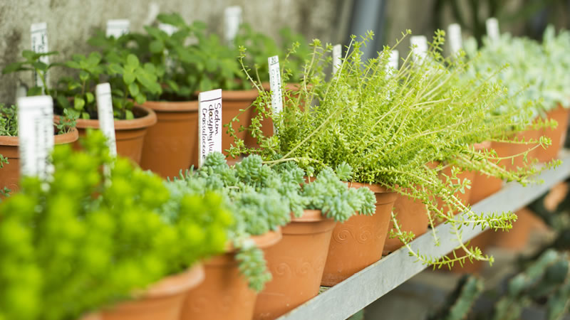 Garden Centres to visit in Norfolk