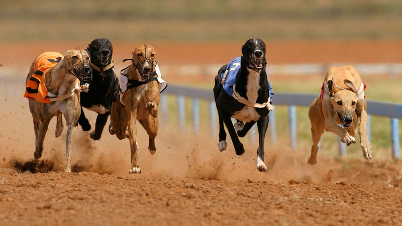 Visit Yarmouth Stadium for Greyhound Racing and Motor Racing