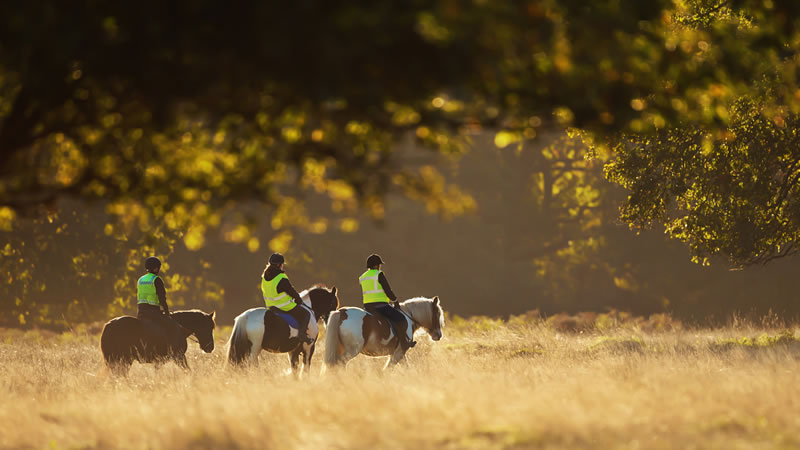 Horse Riding and Horse Riding Holidays in Norfolk